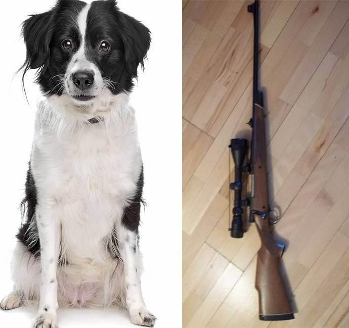 Dog shoots owner – not so much man's best friend