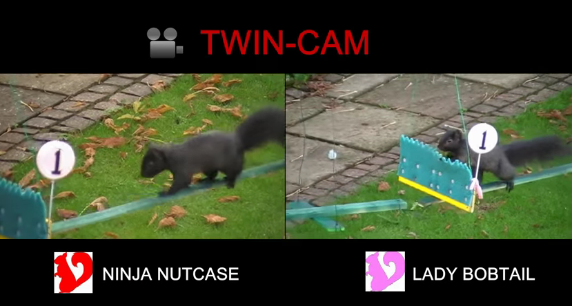 Obstacle course + squirrels + commentary = prime sporting event