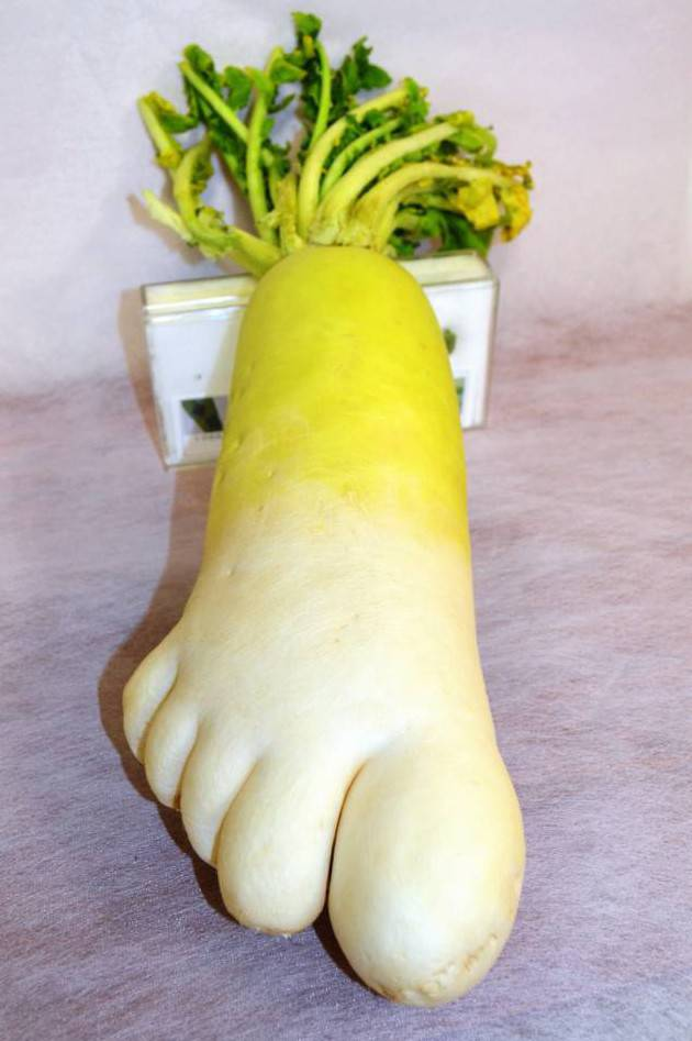 This 'size 11 foot shaped' radish was dug up by a farmer