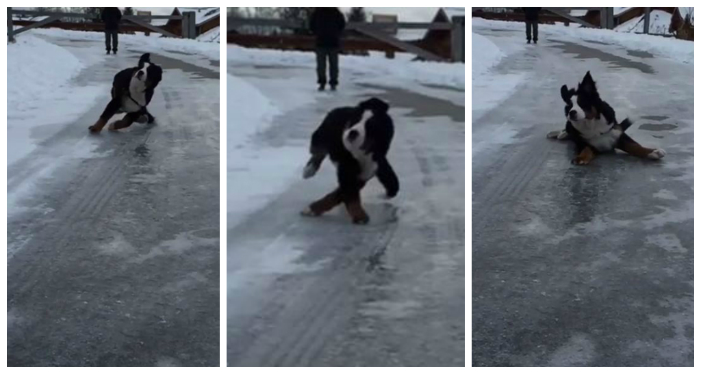 Massive dog slipping on ice in slow-motion will make you smile