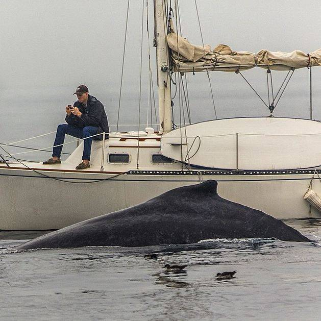Sign of the times: Man too busy texting on phone misses amazing whale sight