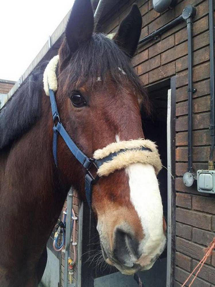Brian the horse is too scared of urban life for the police force