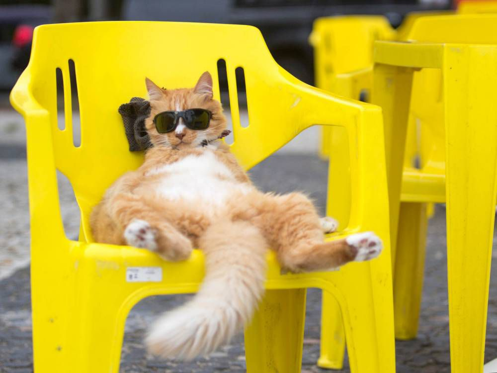 Just a cat lying on a bright yellow chair and wearing sunglasses