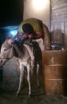 Man lifts donkey with his teeth, as you do