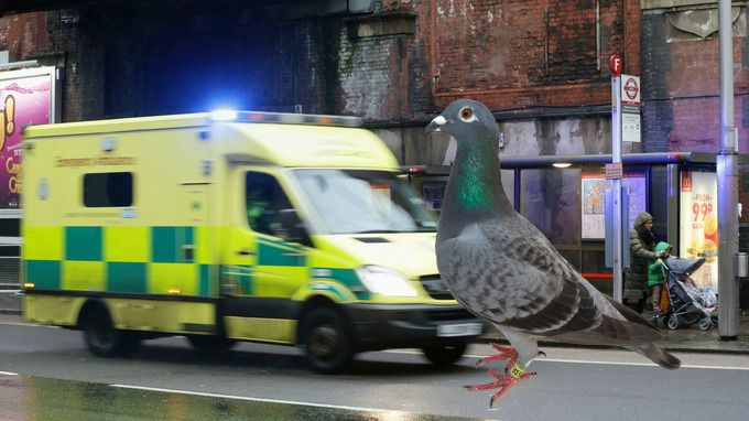 Paramedic rushes to help collapsed woman, finds dying pigeon
