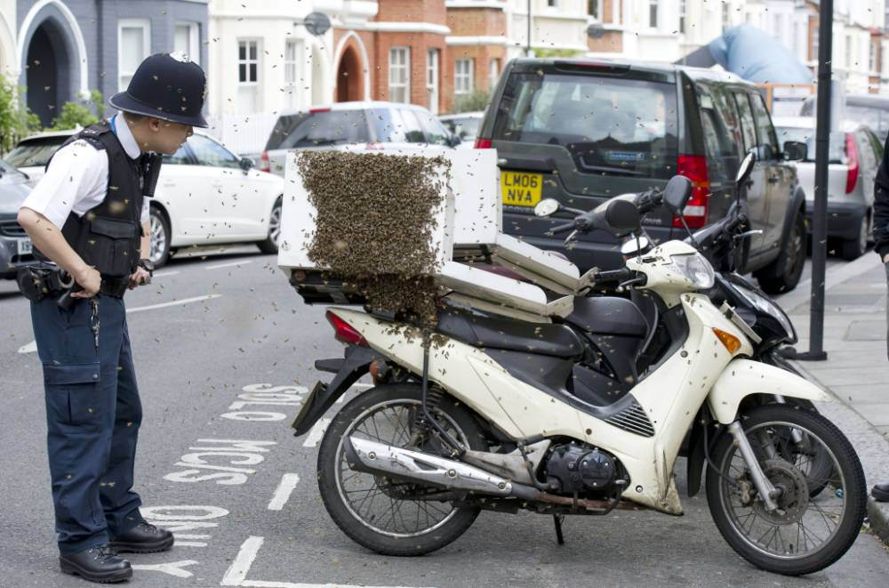 Pizza-loving bees swarm delivery bike in busy London street