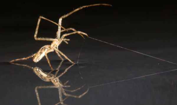Happy Friday! Spiders can sail across water and they're coming to get you