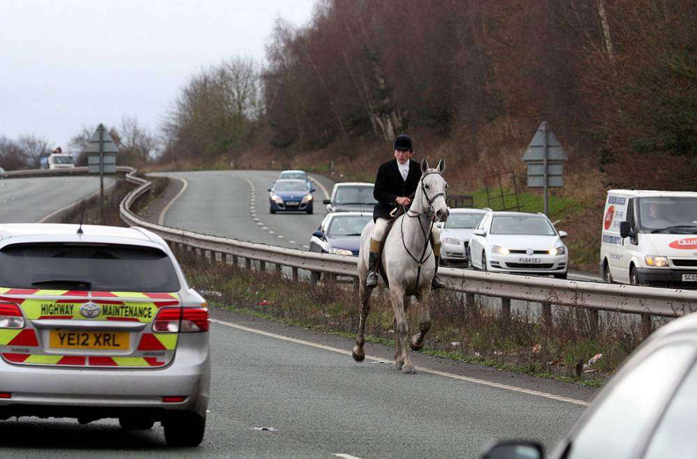 Chaos after dogs and huntsmen stray onto busy dual carriageway