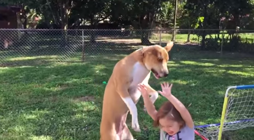 Dog jumps in the air then realises in mid-flight he's about to land on child