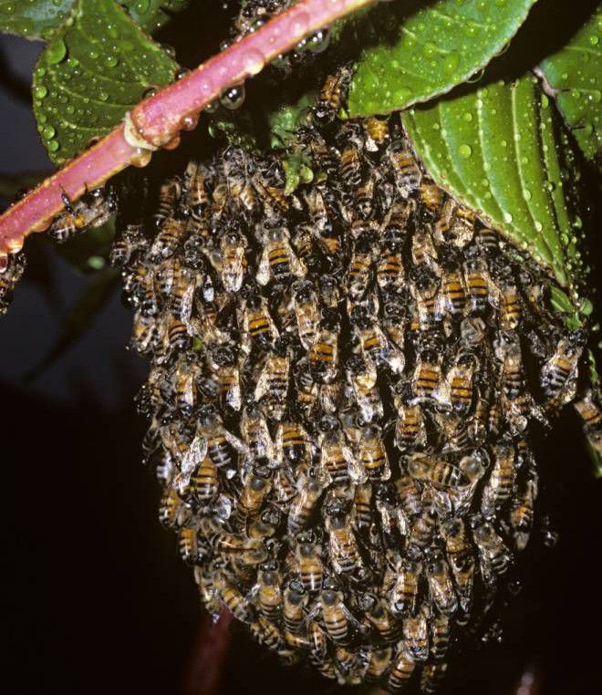 Bus passengers who urinated on a beehive are stung in some unfortunate places