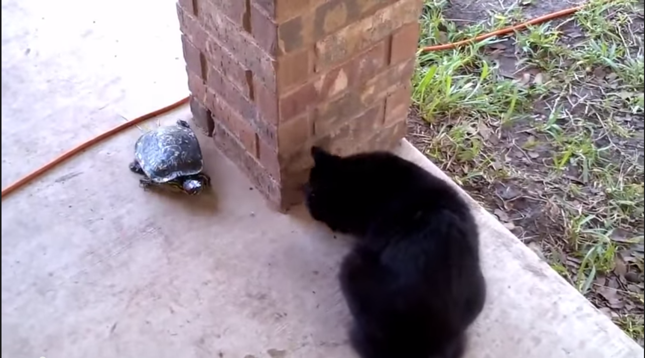 Cat takes on turtle in dizzy garden game