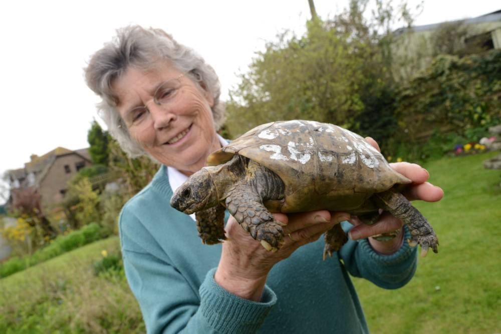 Tortoise, 109, back with his owner after doing a runner for a year