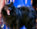 'Britain's Got Talent': Hypnotist Dog Fails To Make Simon Cowell Fall Under Its Spell (VIDEO)