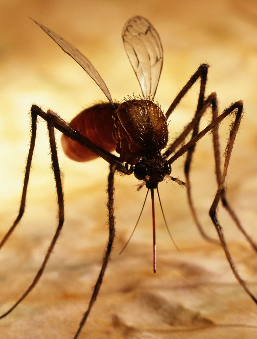 Ever wondered why mosquitoes keep biting you? It's in your genes, study finds