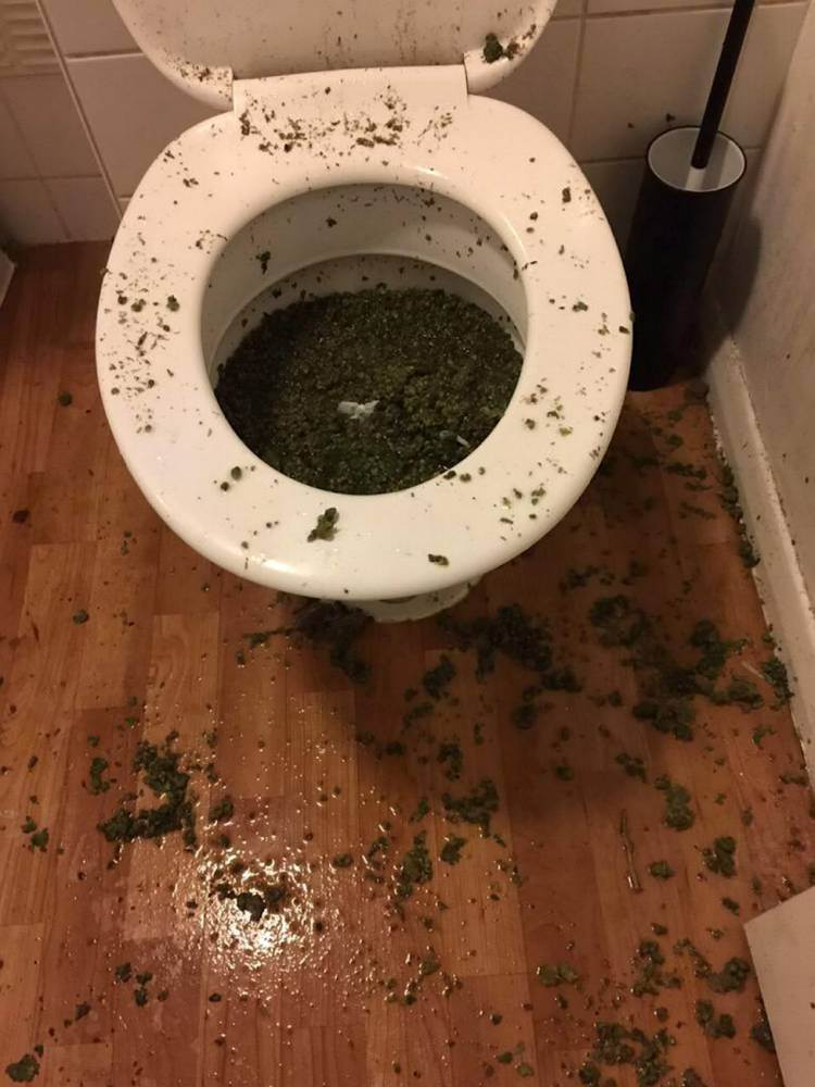 Police smell cannabis through letter box, then find this in the loo