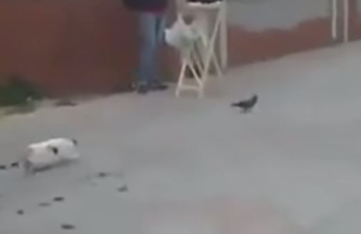 This cat is seriously annoyed that it didn't catch a pigeon