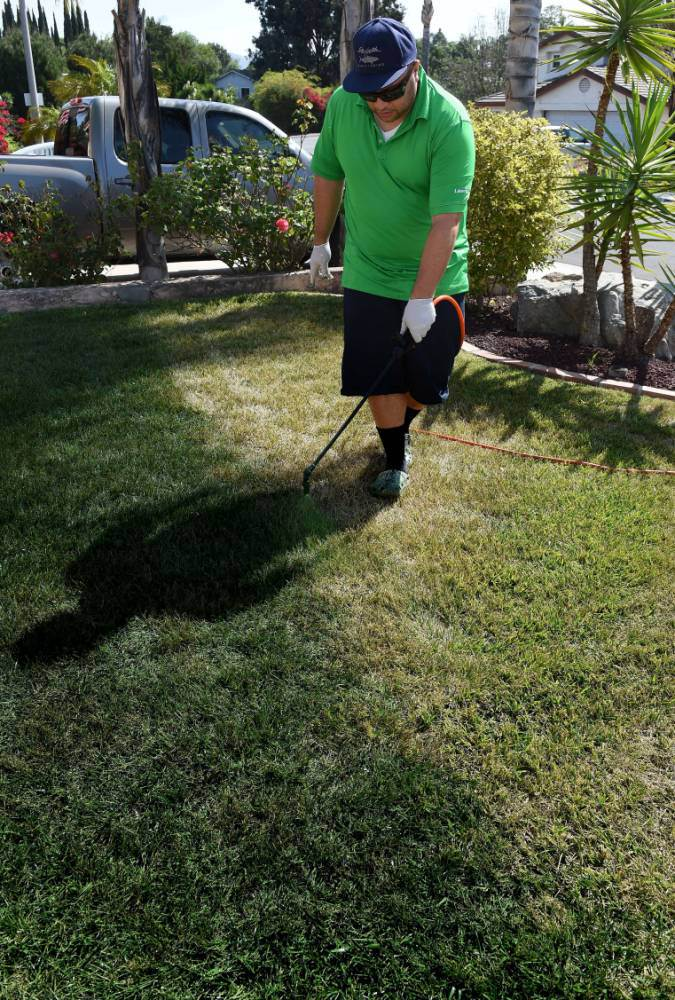 People in California are actually painting their grass green due to the drought