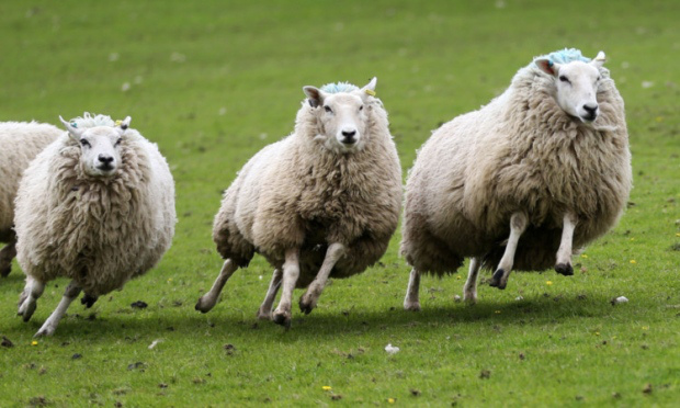 PETA made a complaint against a farmer who swore at his sheep