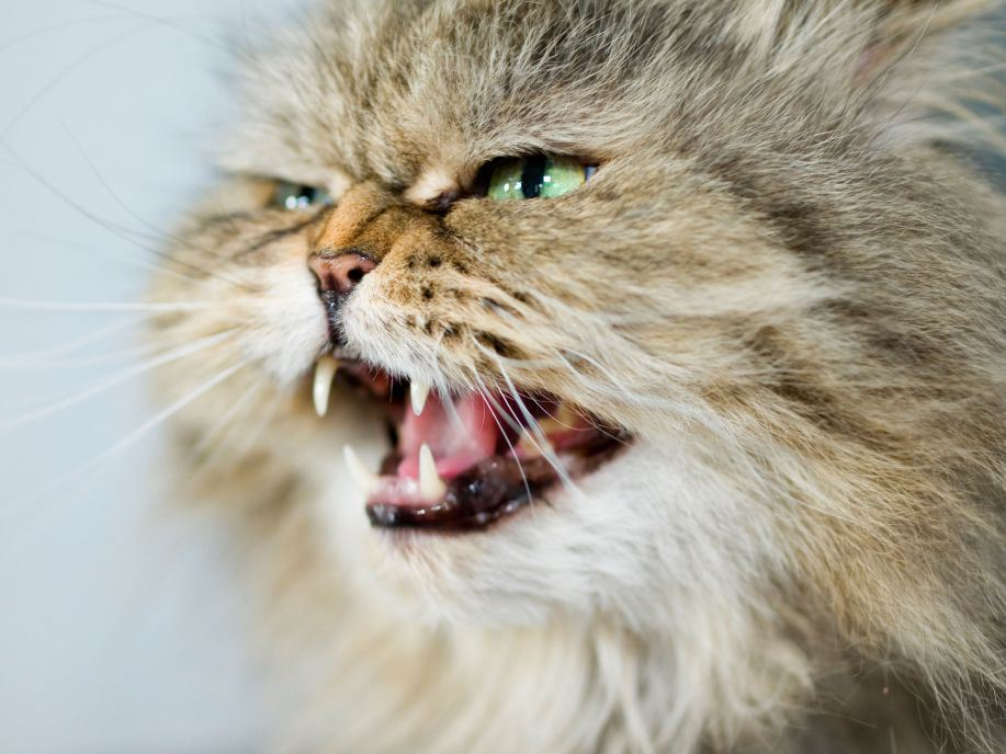 Homeowner calls police when cat refuses to allow him back inside home