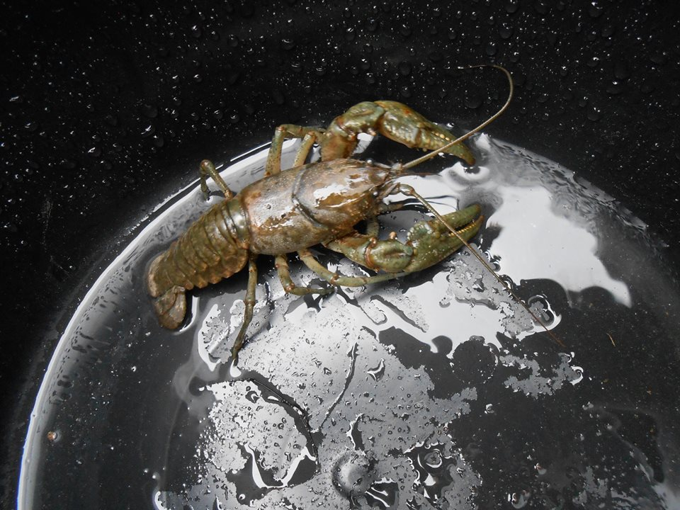 There's something off with this picture of a lobster taking over the earth