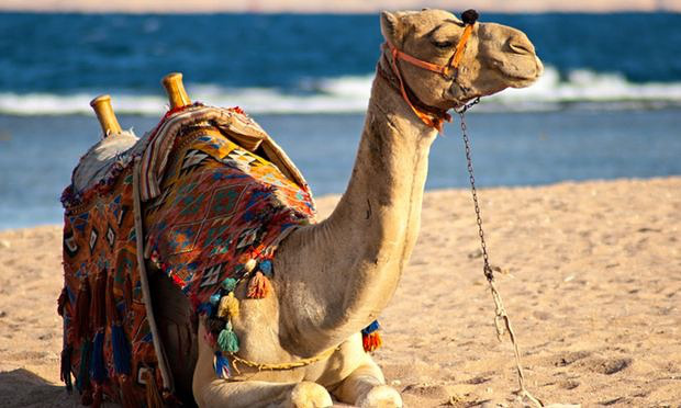 'Camel' on the tracks that delayed trains turned out to be a dead cat