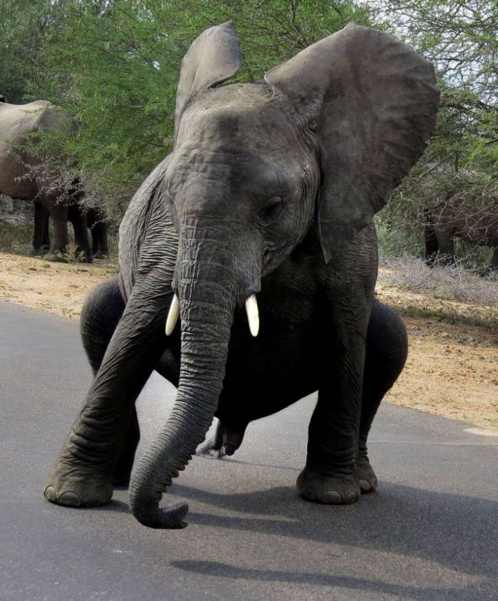 Up-town trunk: Baby elephant shows off breakdancing moves