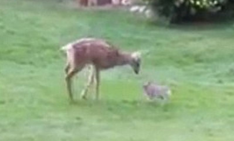 Real life Bambi and Thumper are just the cutest thing