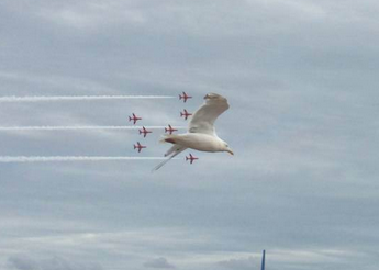 Is that a giant seagull flying in formation with the Red Arrows?