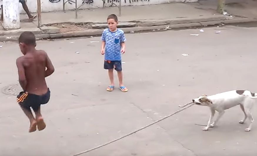 Talented Brazilian dog + skipping rope + young kids = cute animal video gold