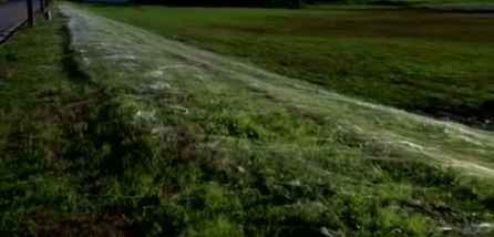 Don't panic, but a town has just been taken over by millions of spiders