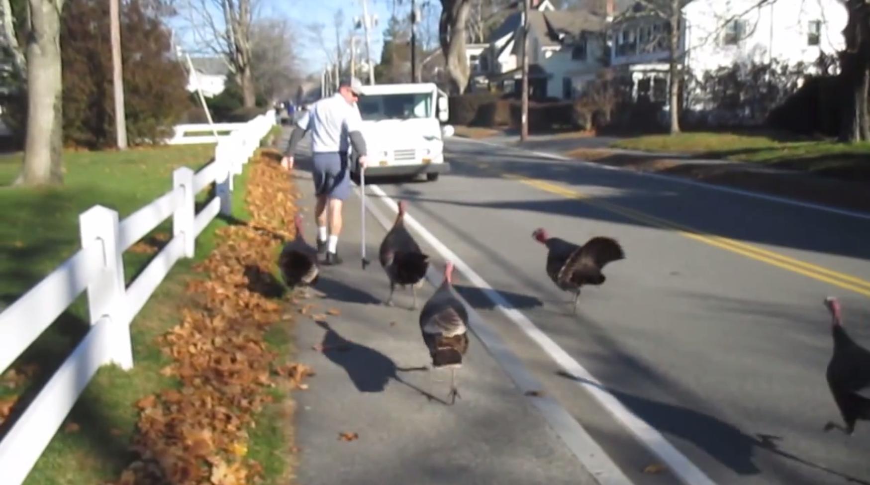 Turkeys get Christmas revenge on postman