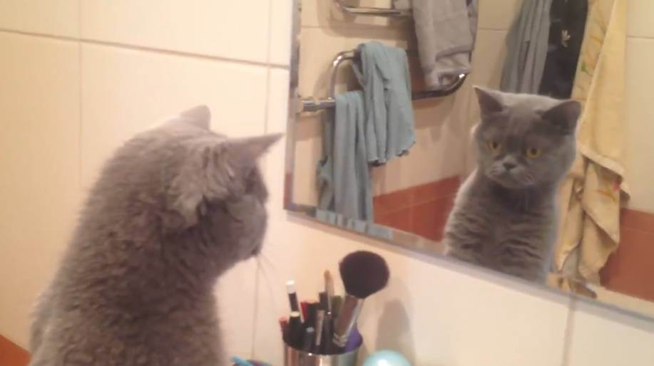 This vain cat just knows he's worth it