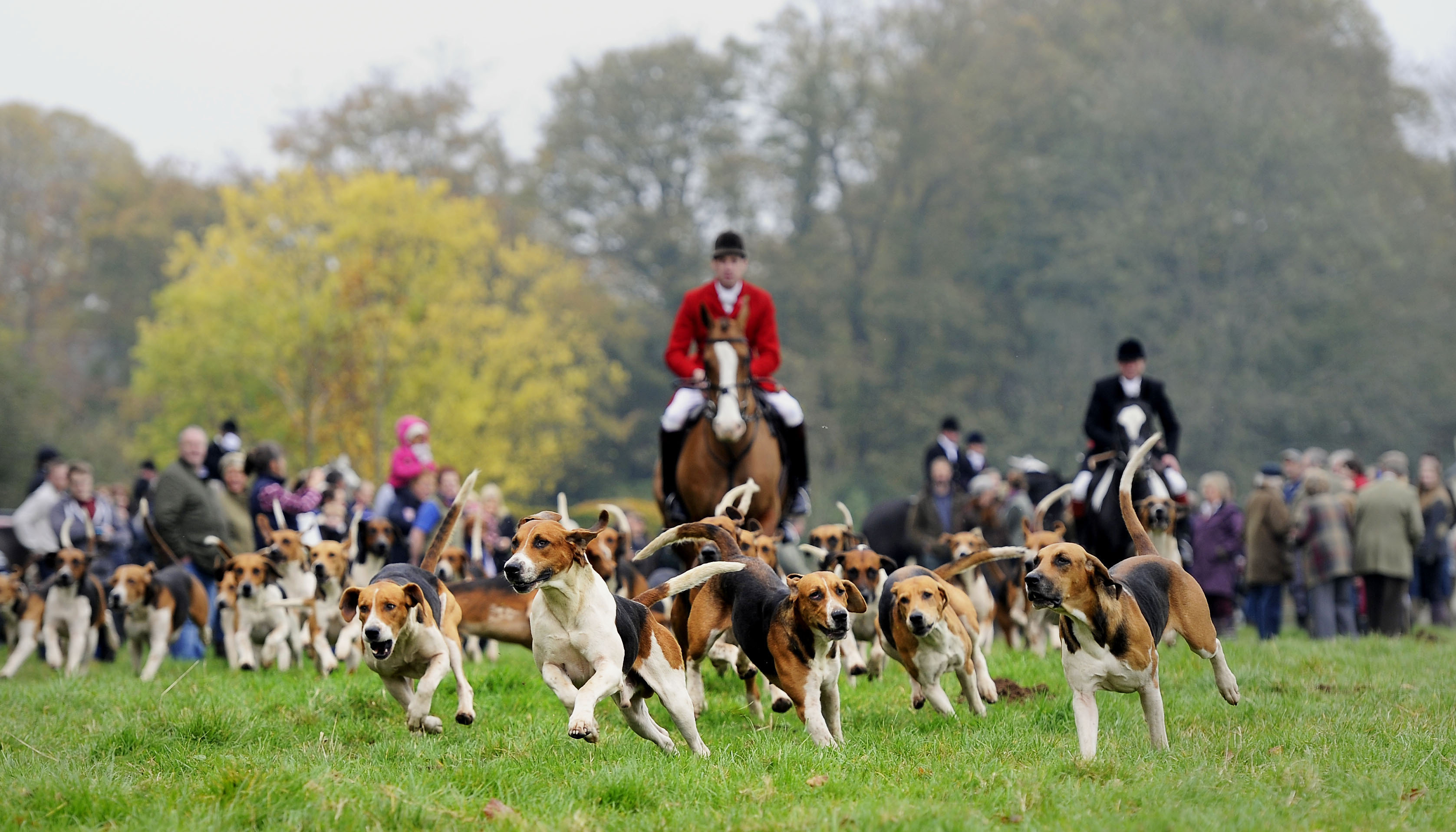 Boxing Day Hunts: Fox Hunting Opposition At An All Time High,  Poll Finds