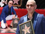 Pitbull says he's living proof hard work pays off as he receives Star on Hollywood Walk of Fame