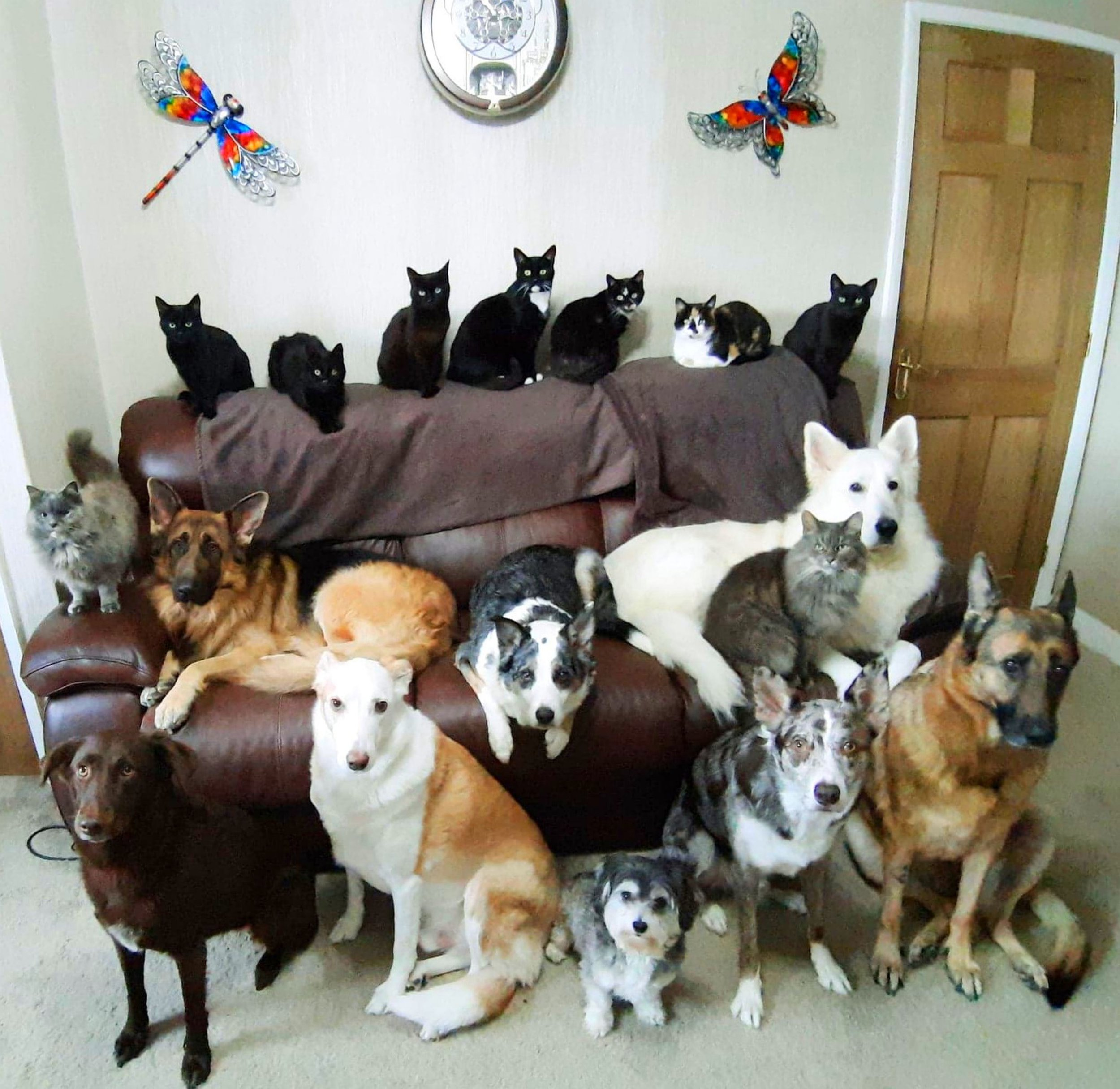 Mum gets perfect family pawtrait of all 17 cats and dogs after a week of trying