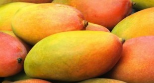 Buy Fresh Mangoes from Distributors in Mexico to Relish Easy to Made Mango Dishes