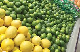 Fresh Organic Lime Suppliers in Mexico Location