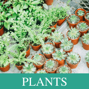 Buy Indoor & Outdoor Plants Online