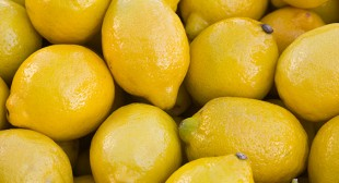 Organic fresh lemon Suppliers in Mexico