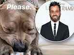 Justin Theroux promises dinner to anyone that goes to city hall in Denver to end the pit bull ban