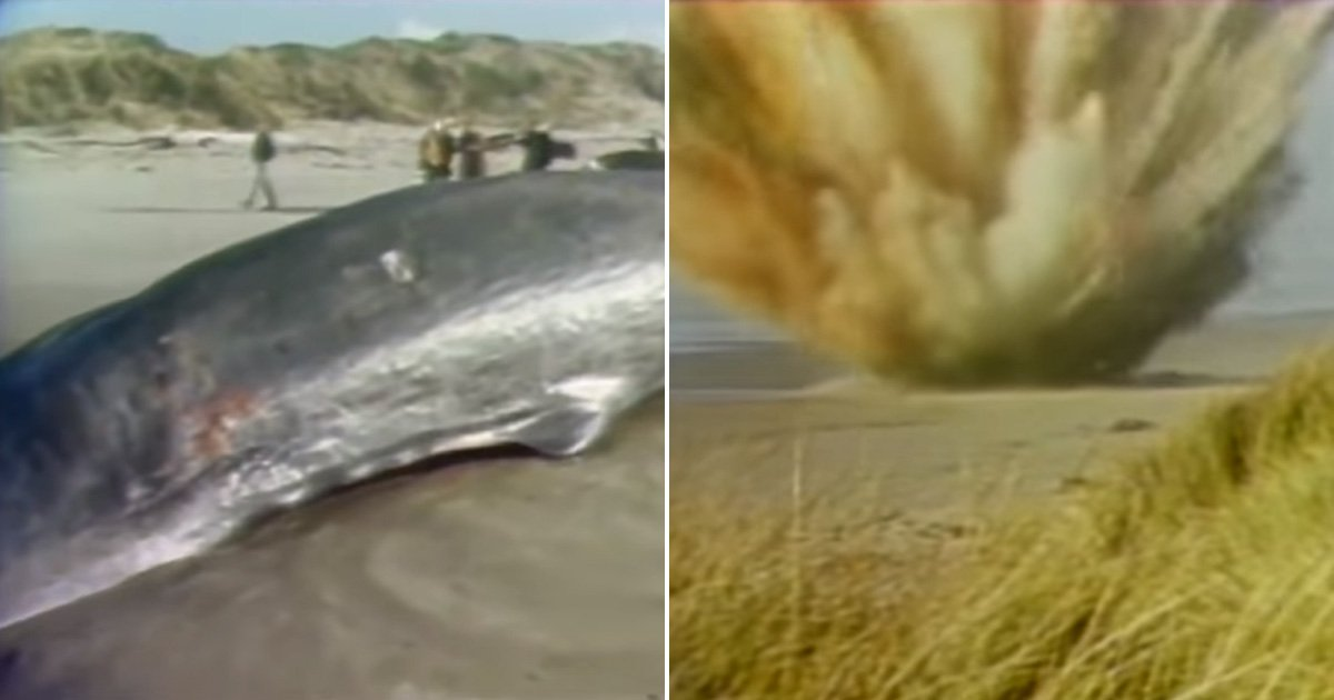 Council uses exploding whale analogy to tell people to listen to the experts