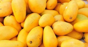 Purchasing mangoes online from reputed suppliers